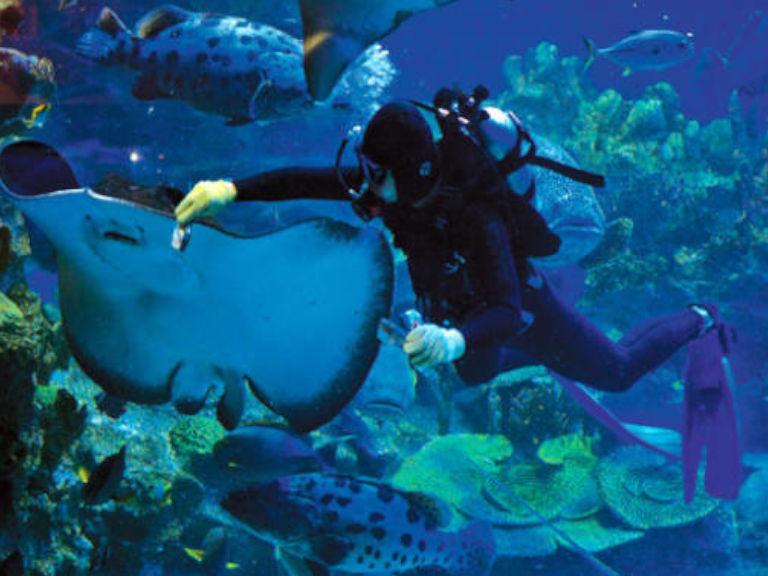 aquaria-klcc-2